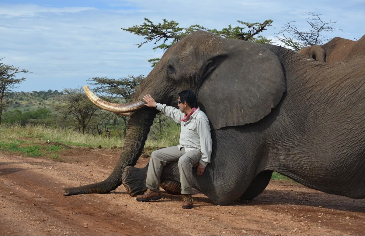Rodolfo Dirzo with an elephant, one of the species of large herbivore experimentally removed from the study plots in Kenya.